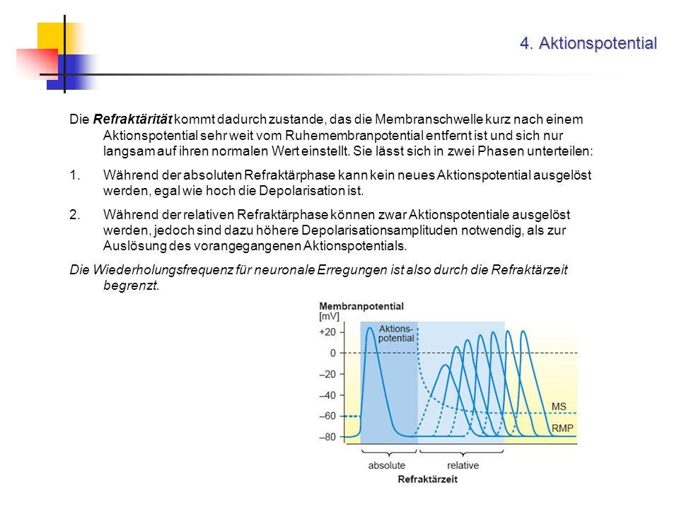 4. Aktionspotential Die Refraktärität kommt dadurch zustande, das die Membranschwelle kurz nach einem Aktionspotential sehr weit vom Ruhemembranpotent