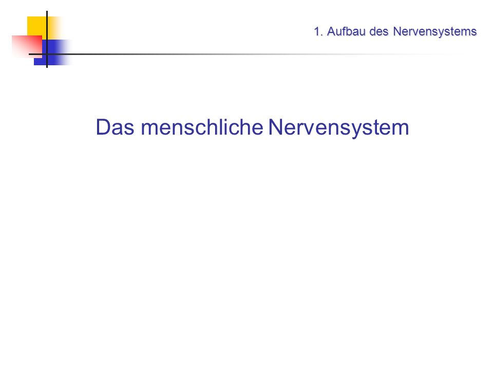 1. Aufbau des Nervensystems Das menschliche Nervensystem das zentrale Nervensystem (ZNS)