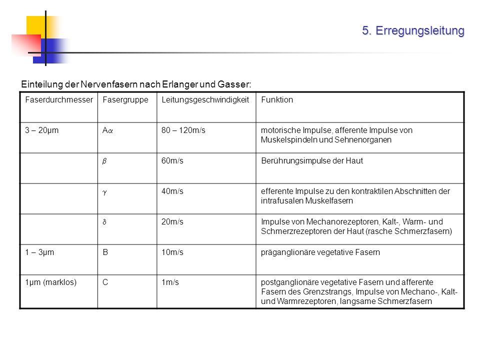 5. Erregungsleitung FaserdurchmesserFasergruppeLeitungsgeschwindigkeitFunktion 3 – 20µm A 80 – 120m/smotorische Impulse, afferente Impulse von Muskels