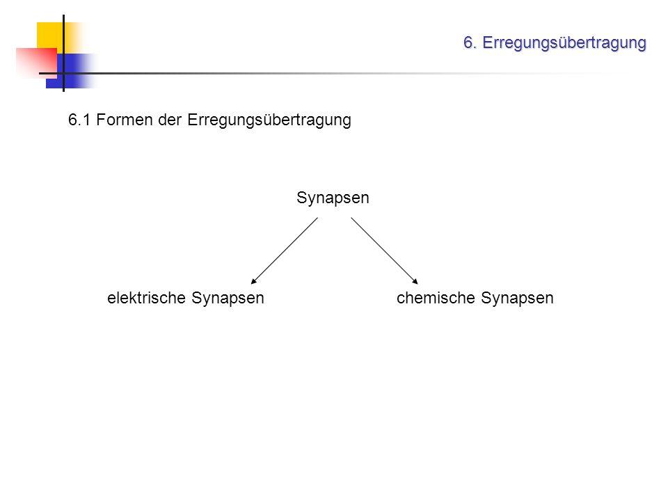 6. Erregungsübertragung 6.1 Formen der Erregungsübertragung Synapsen elektrische Synapsenchemische Synapsen
