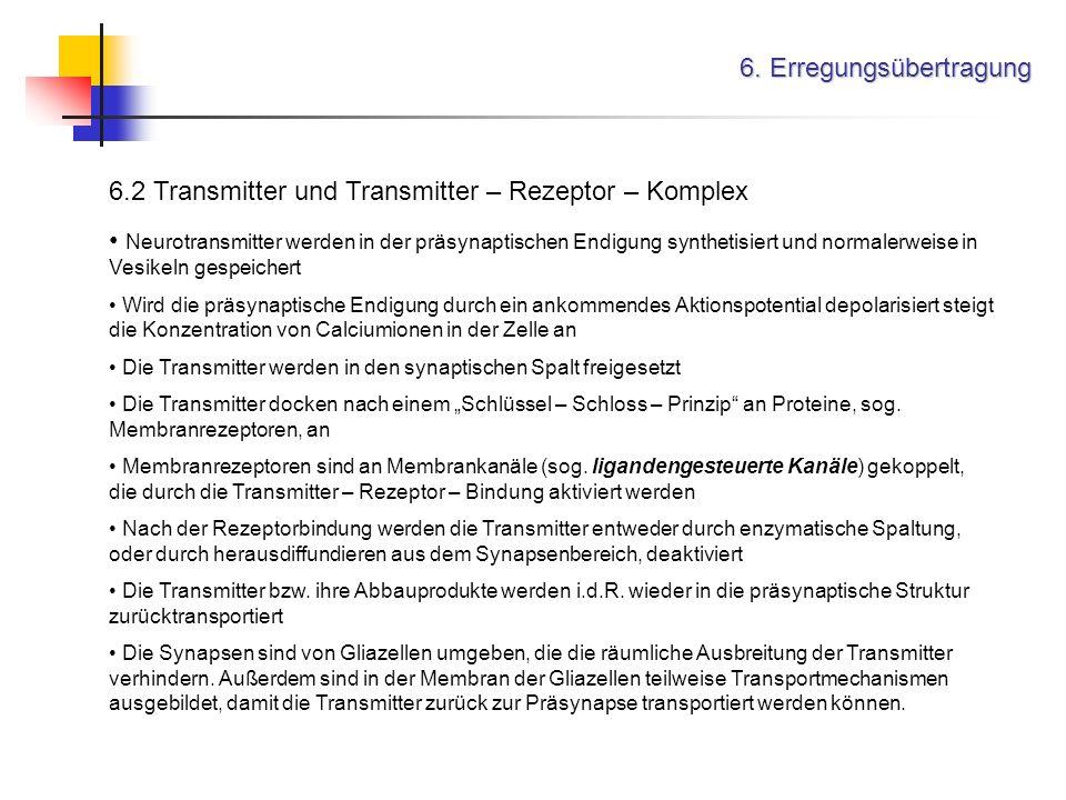 6. Erregungsübertragung 6.2 Transmitter und Transmitter – Rezeptor – Komplex Neurotransmitter werden in der präsynaptischen Endigung synthetisiert und