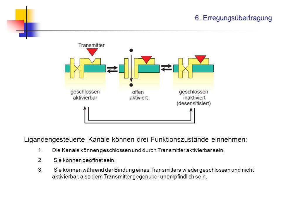 6. Erregungsübertragung Ligandengesteuerte Kanäle können drei Funktionszustände einnehmen: 1.Die Kanäle können geschlossen und durch Transmitter aktiv