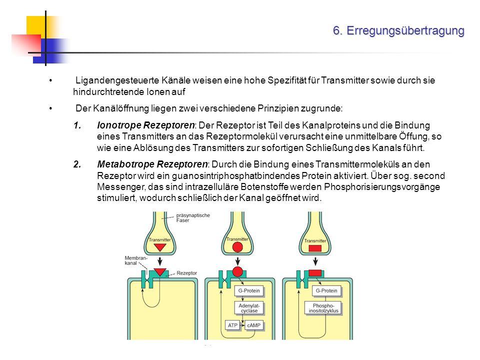 6. Erregungsübertragung Ligandengesteuerte Känäle weisen eine hohe Spezifität für Transmitter sowie durch sie hindurchtretende Ionen auf Der Kanälöffn