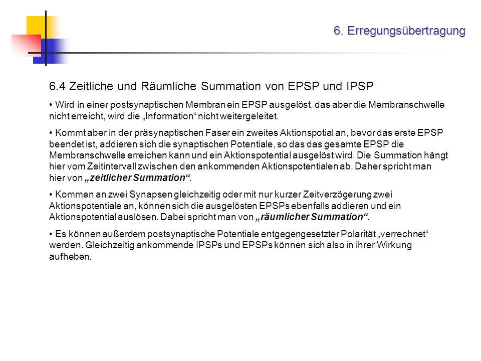6. Erregungsübertragung 6.4 Zeitliche und Räumliche Summation von EPSP und IPSP Wird in einer postsynaptischen Membran ein EPSP ausgelöst, das aber di