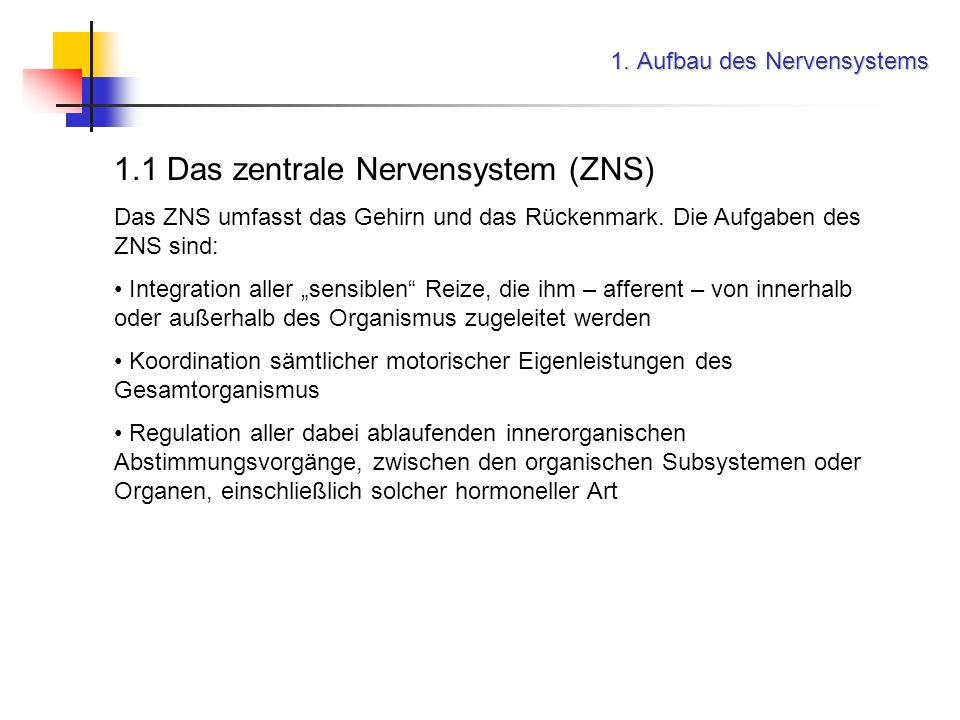Informationsübertragung im Nervensystem 4. Aktionspotential