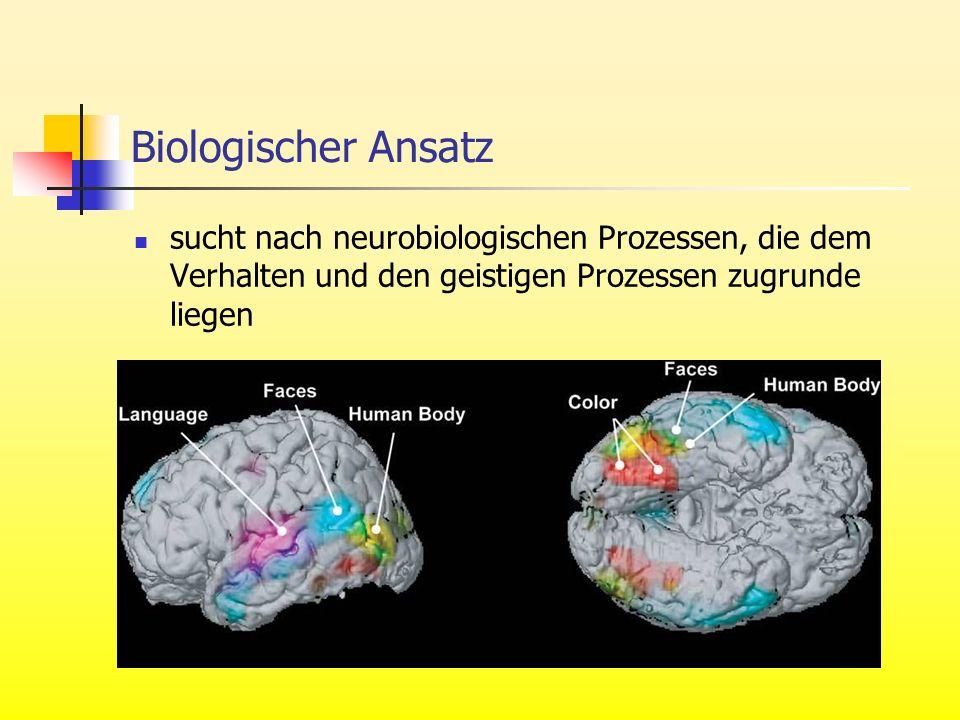 Biologischer Ansatz sucht nach neurobiologischen Prozessen, die dem Verhalten und den geistigen Prozessen zugrunde liegen