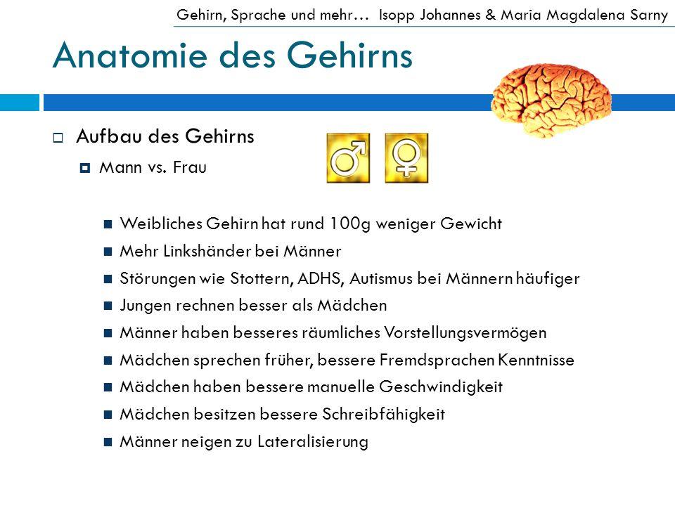 Anatomie des Gehirns Aufbau des Gehirns Mann vs. Frau Weibliches Gehirn hat rund 100g weniger Gewicht Mehr Linkshänder bei Männer Störungen wie Stotte