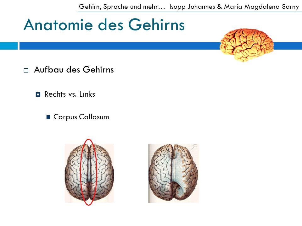 Anatomie des Gehirns Aufbau des Gehirns Rechts vs. Links Corpus Callosum Gehirn, Sprache und mehr…Isopp Johannes & Maria Magdalena Sarny