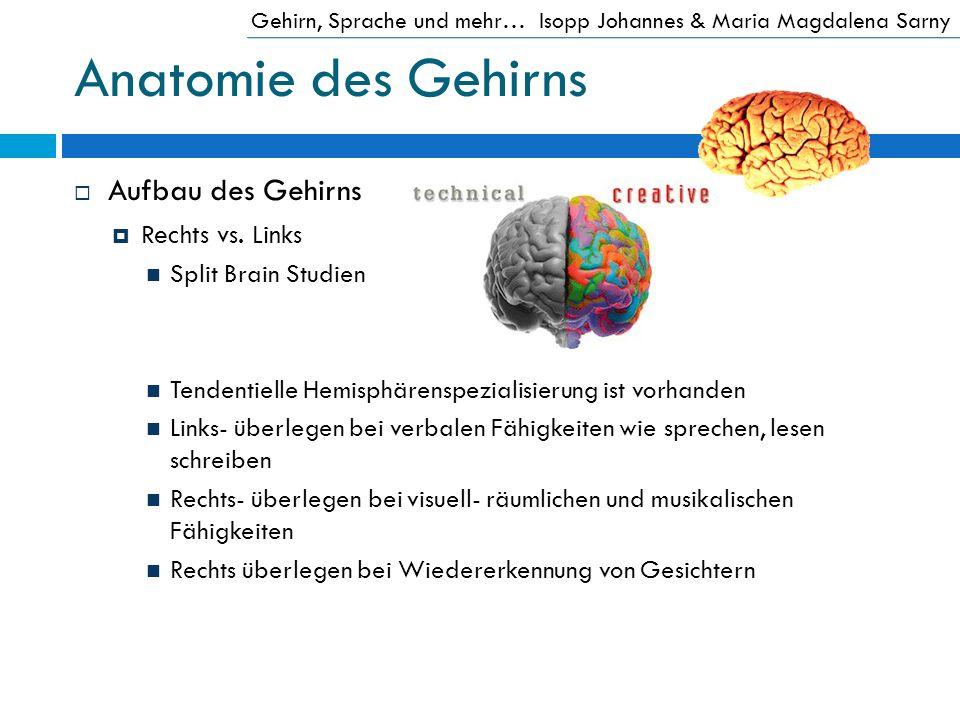Anatomie des Gehirns Aufbau des Gehirns Rechts vs. Links Split Brain Studien Tendentielle Hemisphärenspezialisierung ist vorhanden Links- überlegen be