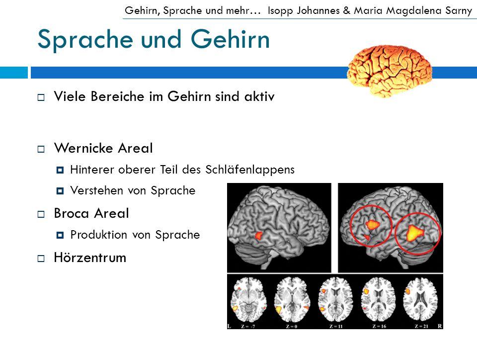 Sprache und Gehirn Viele Bereiche im Gehirn sind aktiv Wernicke Areal Hinterer oberer Teil des Schläfenlappens Verstehen von Sprache Broca Areal Produ