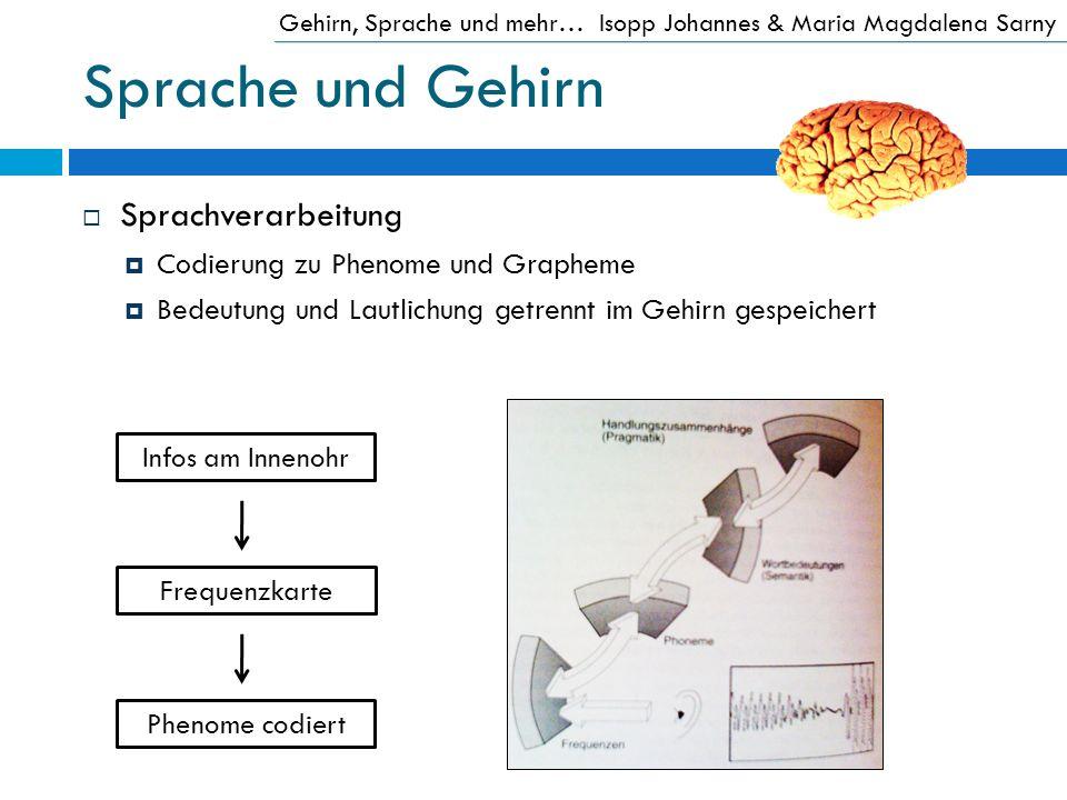 Sprache und Gehirn Sprachverarbeitung Codierung zu Phenome und Grapheme Bedeutung und Lautlichung getrennt im Gehirn gespeichert Gehirn, Sprache und m