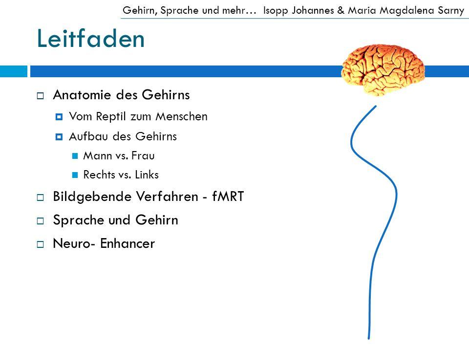 Leitfaden Anatomie des Gehirns Vom Reptil zum Menschen Aufbau des Gehirns Mann vs. Frau Rechts vs. Links Bildgebende Verfahren - fMRT Sprache und Gehi
