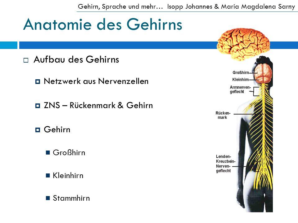 Anatomie des Gehirns Aufbau des Gehirns Netzwerk aus Nervenzellen ZNS – Rückenmark & Gehirn Gehirn Großhirn Kleinhirn Stammhirn Gehirn, Sprache und me
