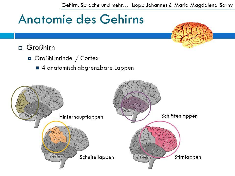 Anatomie des Gehirns Großhirn Großhirnrinde / Cortex 4 anatomisch abgrenzbare Lappen Gehirn, Sprache und mehr…Isopp Johannes & Maria Magdalena Sarny H