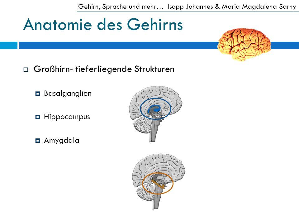 Anatomie des Gehirns Großhirn- tieferliegende Strukturen Basalganglien Hippocampus Amygdala Gehirn, Sprache und mehr…Isopp Johannes & Maria Magdalena
