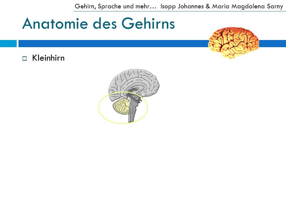 Anatomie des Gehirns Kleinhirn Gehirn, Sprache und mehr…Isopp Johannes & Maria Magdalena Sarny