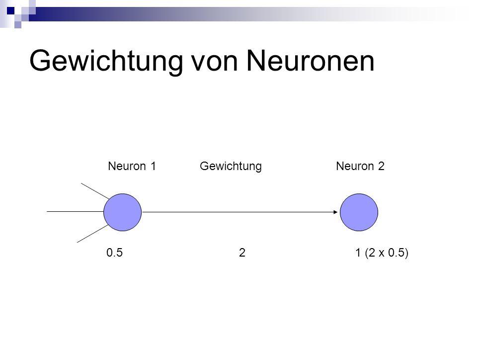 Gewichtung von Neuronen 0.5 2 1 (2 x 0.5) Neuron 1 Gewichtung Neuron 2