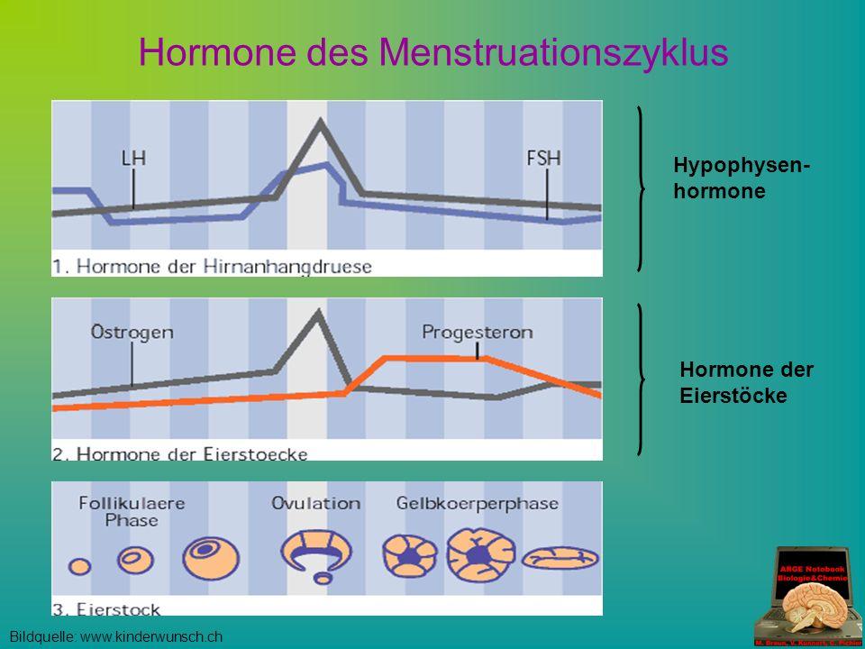 Hypophysen- hormone Hormone der Eierstöcke Hormone des Menstruationszyklus Bildquelle: www.kinderwunsch.ch
