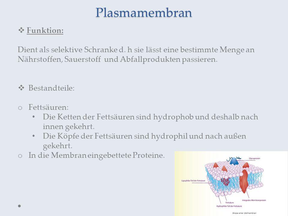 Plasmamembran Funktion: Dient als selektive Schranke d. h sie lässt eine bestimmte Menge an Nährstoffen, Sauerstoff und Abfallprodukten passieren. Bes