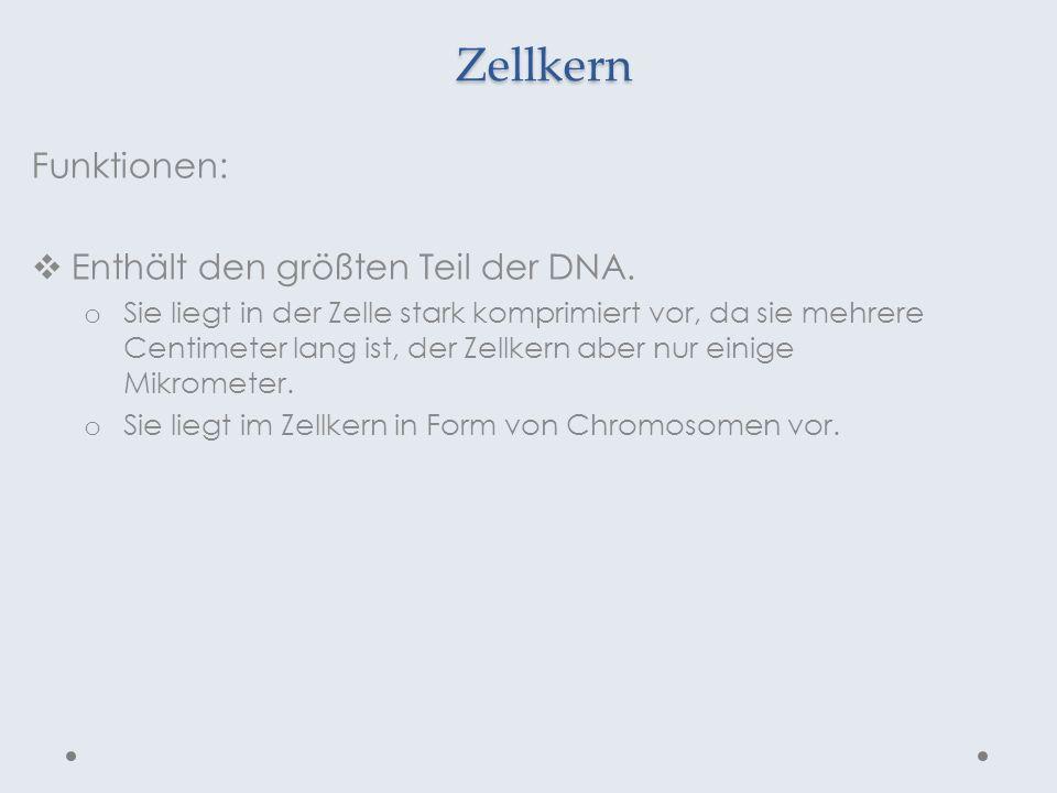 Zellkern Funktionen: Enthält den größten Teil der DNA. o Sie liegt in der Zelle stark komprimiert vor, da sie mehrere Centimeter lang ist, der Zellker