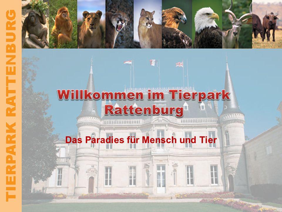 TIERPARK RATTENBURG Kontakt Direktor –Dr.