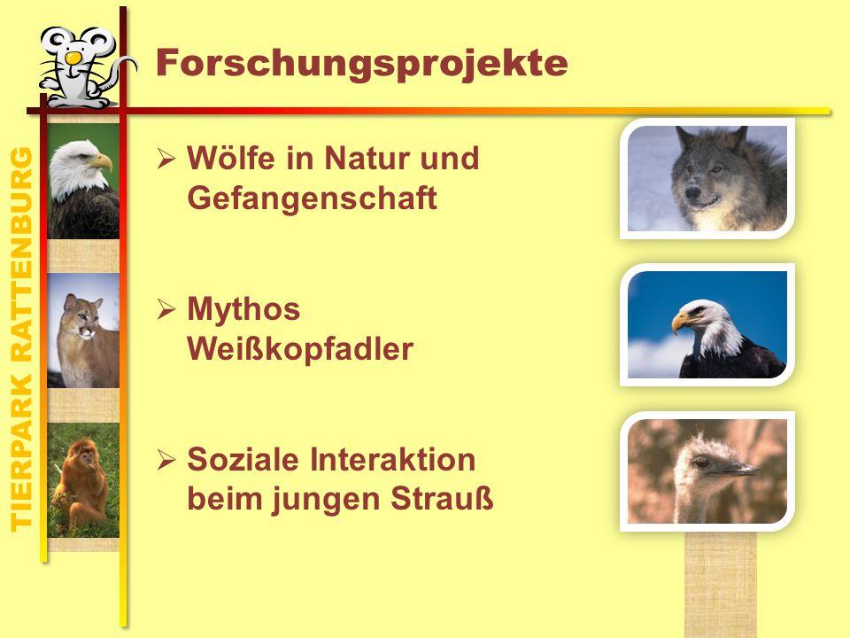 Schwerpunkt: Wölfe in Natur und Gehege