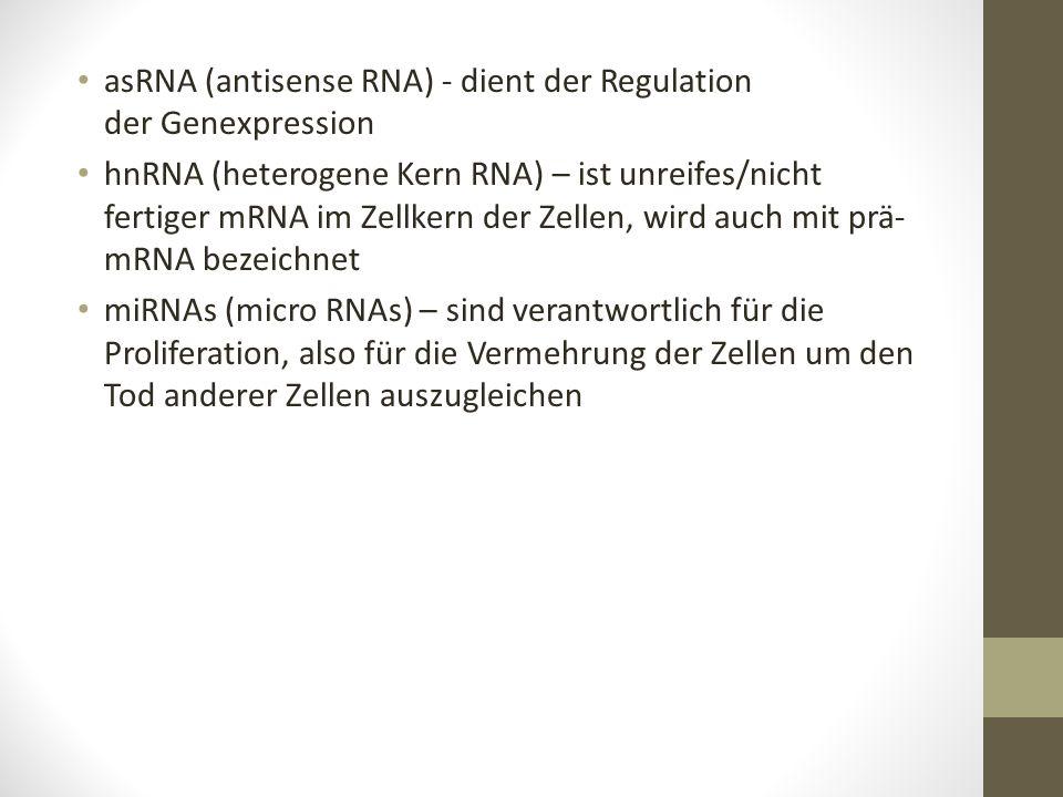 asRNA (antisense RNA) - dient der Regulation der Genexpression hnRNA (heterogene Kern RNA) – ist unreifes/nicht fertiger mRNA im Zellkern der Zellen,