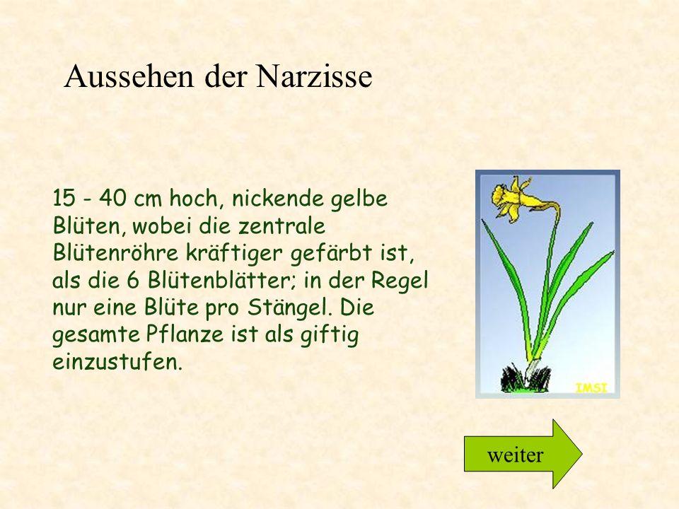 15 - 40 cm hoch, nickende gelbe Blüten, wobei die zentrale Blütenröhre kräftiger gefärbt ist, als die 6 Blütenblätter; in der Regel nur eine Blüte pro Stängel.
