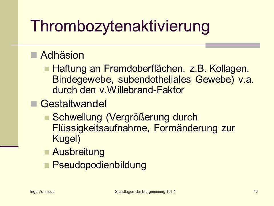 Inge Vonnieda Grundlagen der Blutgerinnung Teil 110 Thrombozytenaktivierung Adhäsion Haftung an Fremdoberflächen, z.B. Kollagen, Bindegewebe, subendot