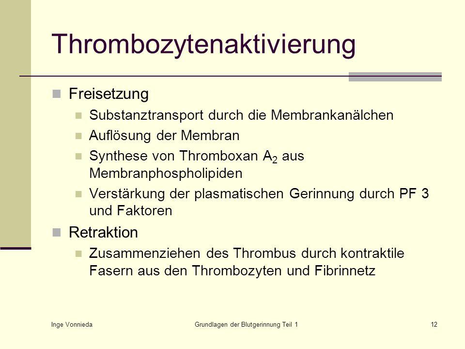 Inge Vonnieda Grundlagen der Blutgerinnung Teil 112 Thrombozytenaktivierung Freisetzung Substanztransport durch die Membrankanälchen Auflösung der Mem