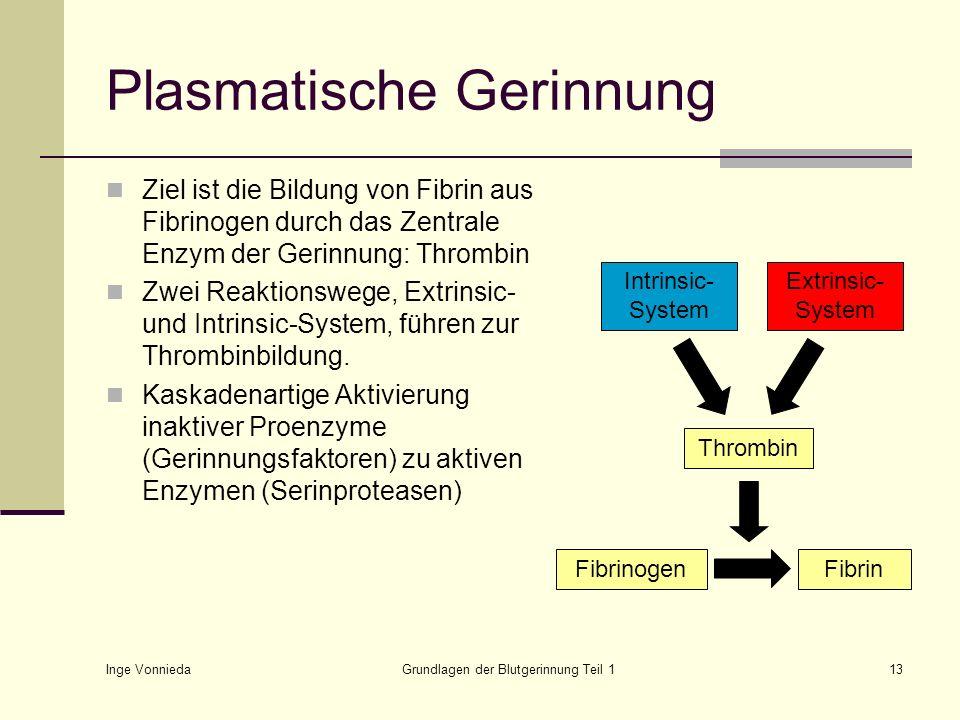 Inge Vonnieda Grundlagen der Blutgerinnung Teil 113 Plasmatische Gerinnung Ziel ist die Bildung von Fibrin aus Fibrinogen durch das Zentrale Enzym der