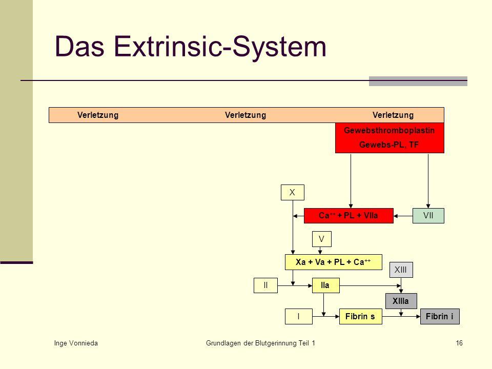 Inge Vonnieda Grundlagen der Blutgerinnung Teil 116 Das Extrinsic-System VerletzungVerletzungVerletzung Gewebsthromboplastin Gewebs-PL, TF X Xa + Va +
