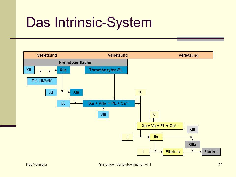 Inge Vonnieda Grundlagen der Blutgerinnung Teil 117 Das Intrinsic-System VerletzungVerletzungVerletzung Fremdoberfläche XIXIaIXIXa + VIIIa + PL + Ca +