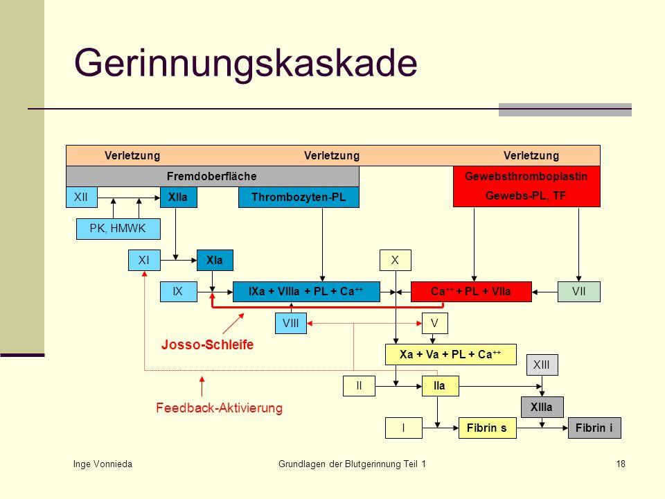 Inge Vonnieda Grundlagen der Blutgerinnung Teil 118 Gerinnungskaskade VerletzungVerletzungVerletzung Fremdoberfläche XIXIaIXIXa + VIIIa + PL + Ca ++ V