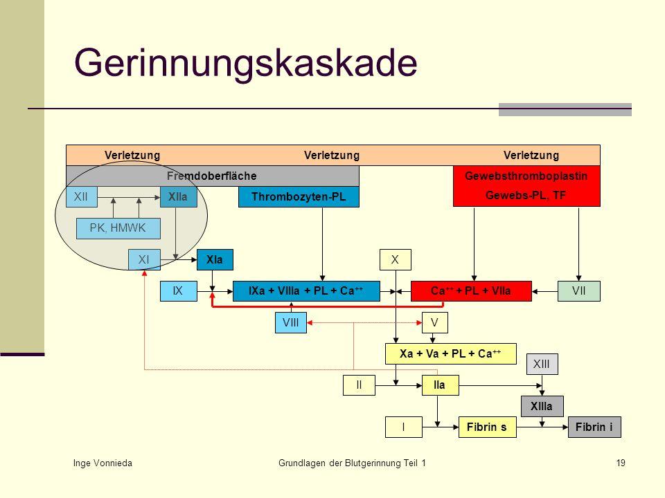 Inge Vonnieda Grundlagen der Blutgerinnung Teil 119 Gerinnungskaskade VerletzungVerletzungVerletzung Fremdoberfläche XIXIa IXIXa + VIIIa + PL + Ca ++