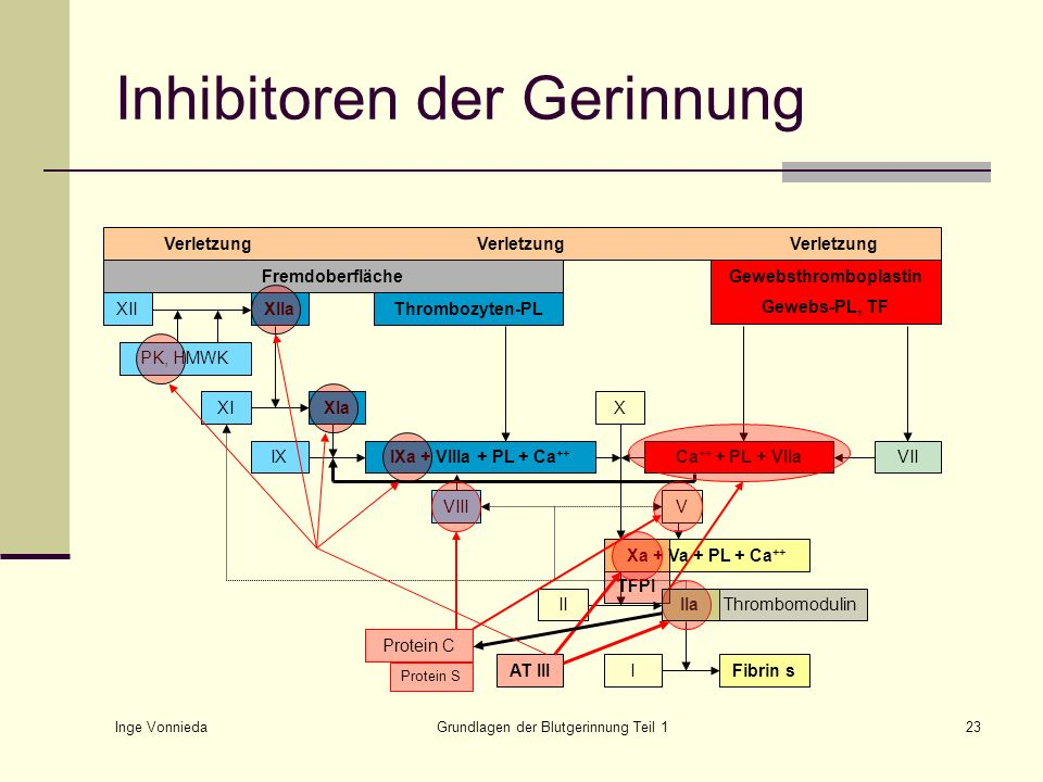 Inge Vonnieda Grundlagen der Blutgerinnung Teil 123 Inhibitoren der Gerinnung VerletzungVerletzungVerletzung Fremdoberfläche XIXIa IXIXa + VIIIa + PL