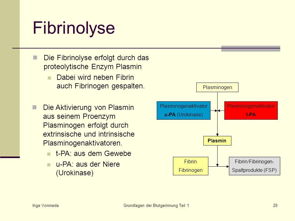 Inge Vonnieda Grundlagen der Blutgerinnung Teil 129 Fibrinolyse Die Fibrinolyse erfolgt durch das proteolytische Enzym Plasmin Dabei wird neben Fibrin