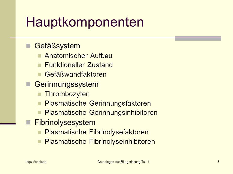 Inge Vonnieda Grundlagen der Blutgerinnung Teil 13 Hauptkomponenten Gefäßsystem Anatomischer Aufbau Funktioneller Zustand Gefäßwandfaktoren Gerinnungs
