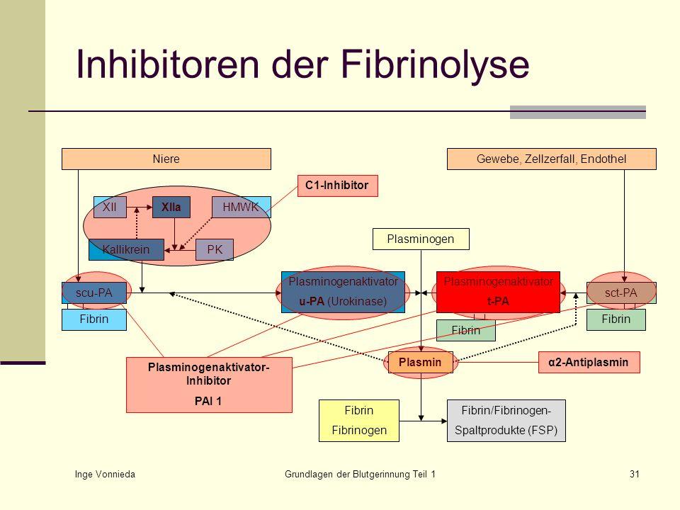 Inge Vonnieda Grundlagen der Blutgerinnung Teil 131 Plasminogen Plasminogenaktivator t-PA Plasminogenaktivator u-PA (Urokinase) Plasmin Fibrin Fibrino
