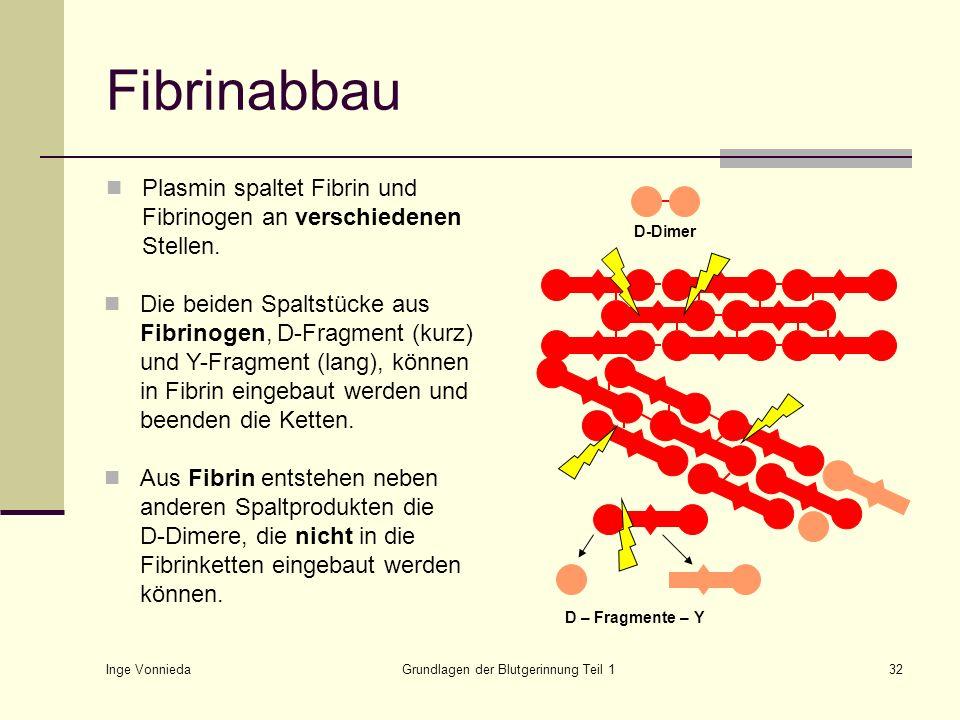 Inge Vonnieda Grundlagen der Blutgerinnung Teil 132 Fibrinabbau Plasmin spaltet Fibrin und Fibrinogen an verschiedenen Stellen. Die beiden Spaltstücke