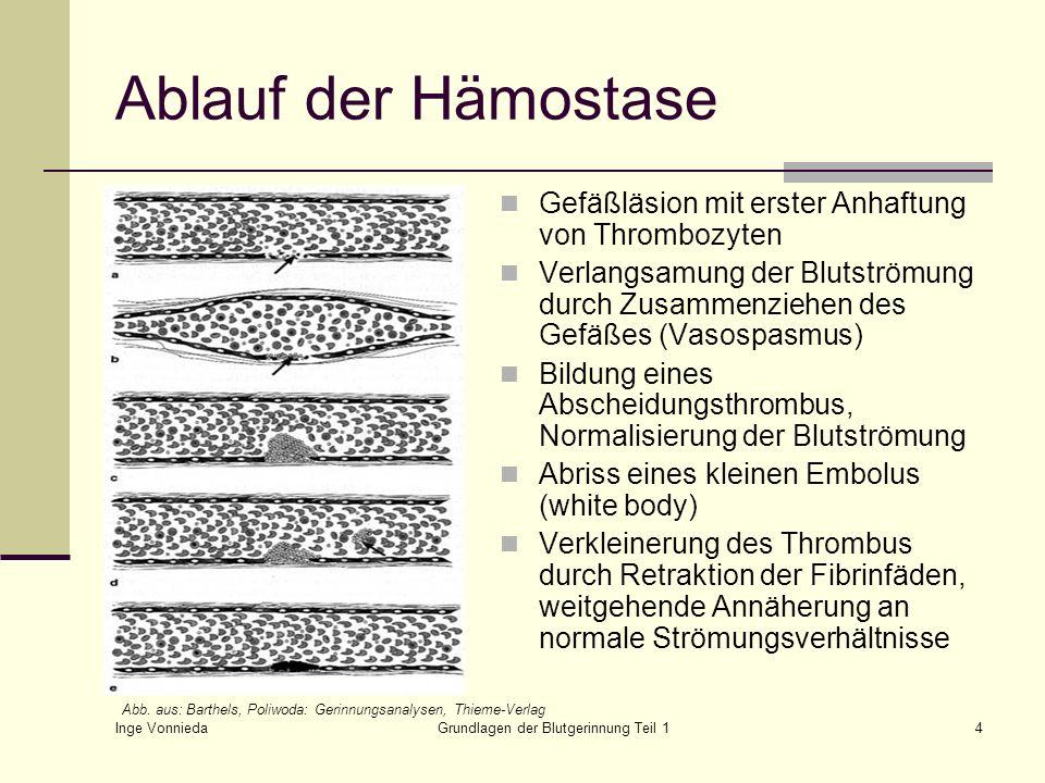 Inge Vonnieda Grundlagen der Blutgerinnung Teil 14 Ablauf der Hämostase Gefäßläsion mit erster Anhaftung von Thrombozyten Verlangsamung der Blutströmu
