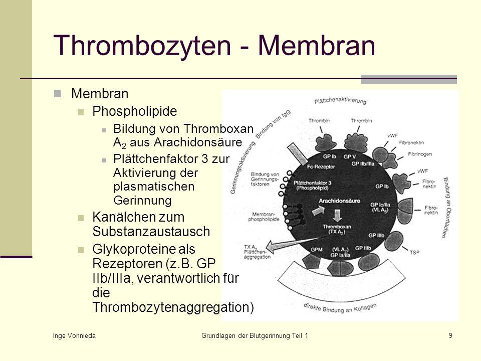 Inge Vonnieda Grundlagen der Blutgerinnung Teil 19 Thrombozyten - Membran Membran Phospholipide Bildung von Thromboxan A 2 aus Arachidonsäure Plättche