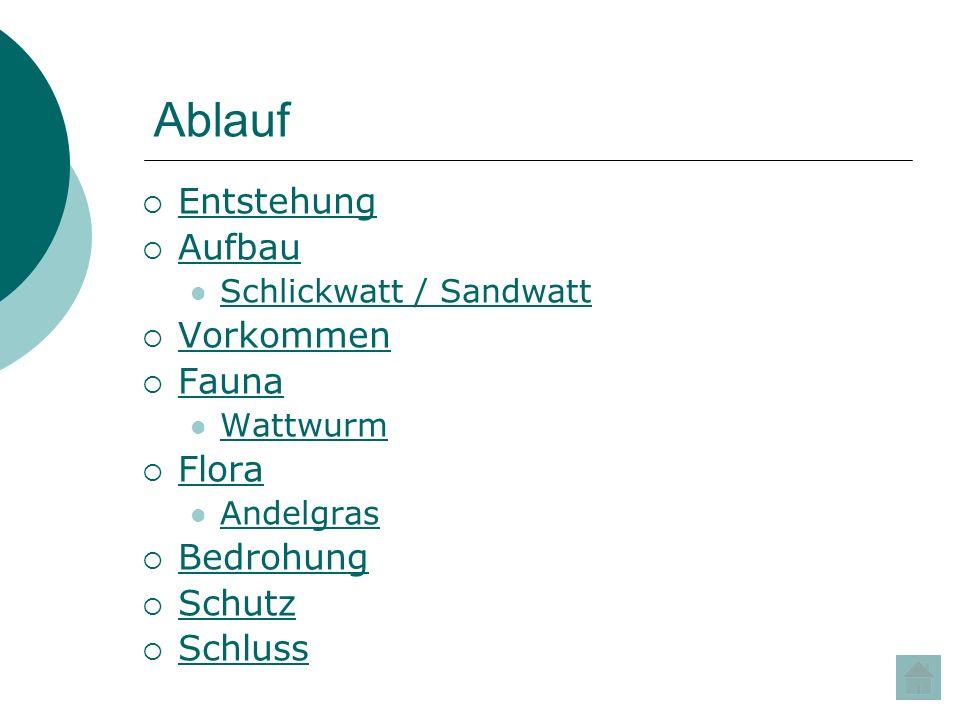 Ablauf Entstehung Aufbau Schlickwatt / Sandwatt Vorkommen Fauna Wattwurm Flora Andelgras Bedrohung Schutz Schluss