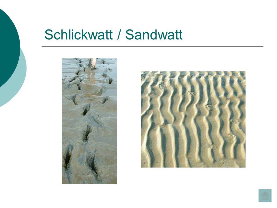 Schlickwatt / Sandwatt