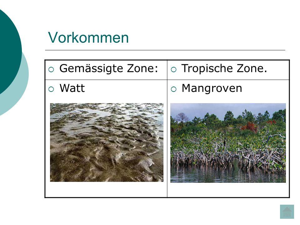 Fauna Muscheln, Schnecken, Krebse und Meereswürmer Fische Robben Vögel