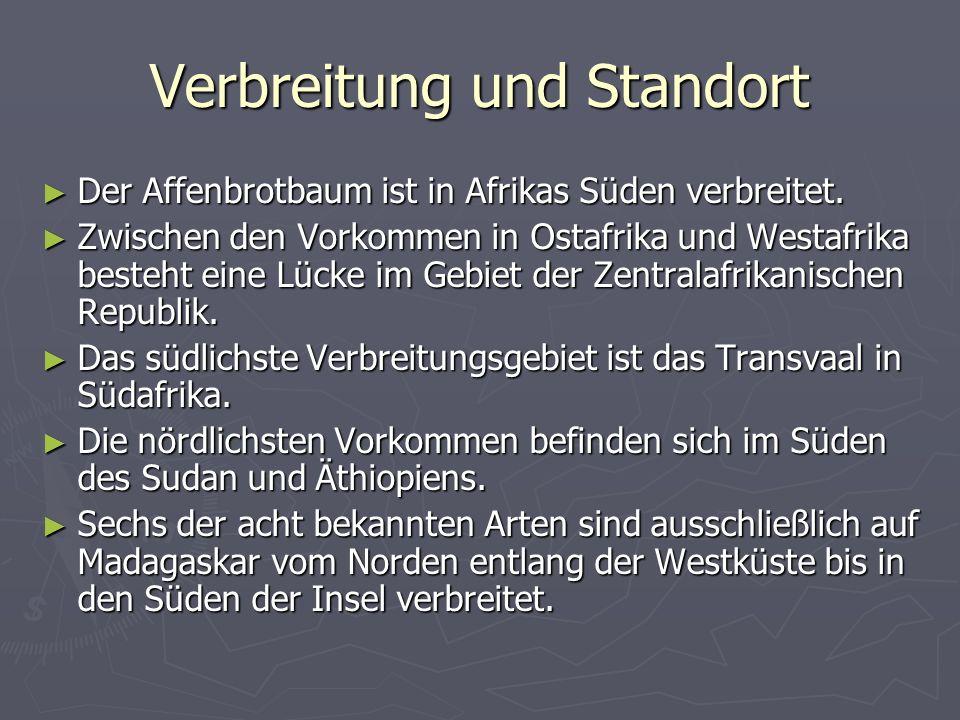 Verbreitung und Standort Der Affenbrotbaum ist in Afrikas Süden verbreitet. Der Affenbrotbaum ist in Afrikas Süden verbreitet. Zwischen den Vorkommen