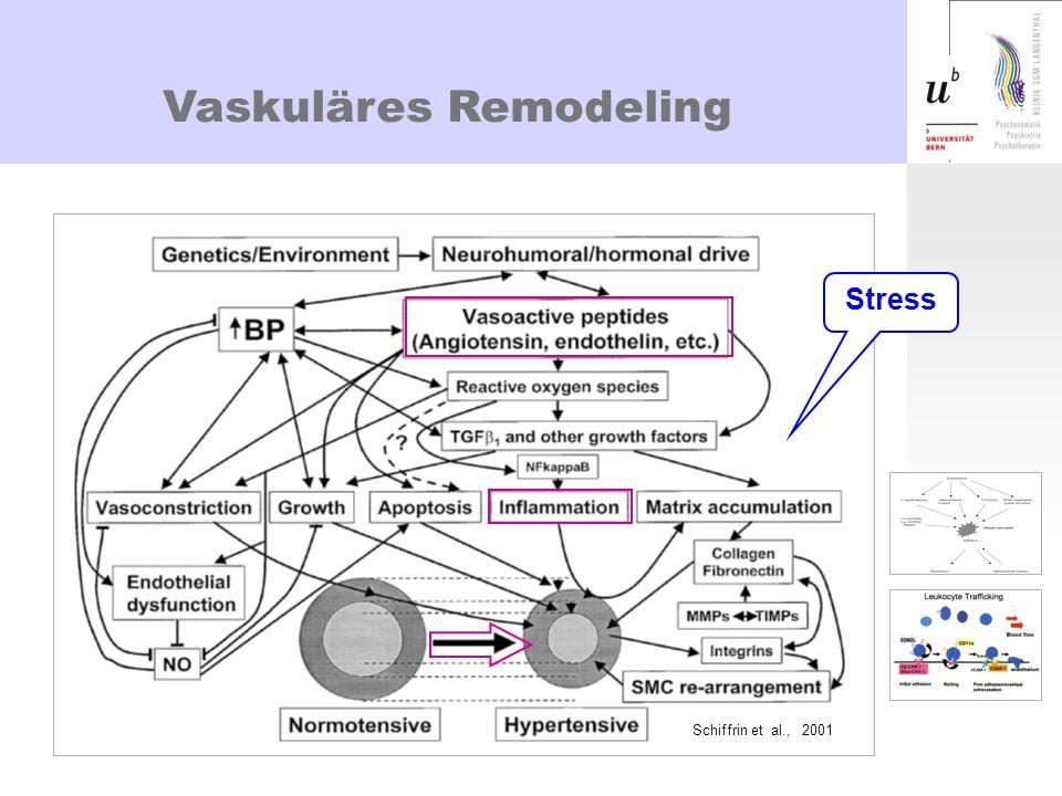 Freisetzung von Cytokinen Wirtz et al., American Journal of Hypertension 2004