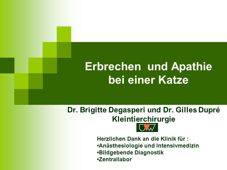 Erbrechen und Apathie bei einer Katze Dr.Brigitte Degasperi und Dr.