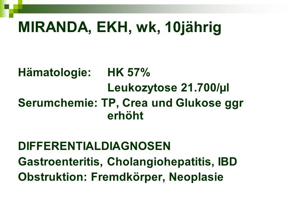 MIRANDA, EKH, wk, 10jährig Hämatologie:HK 57% Leukozytose 21.700/µl Serumchemie: TP, Crea und Glukose ggr erhöht DIFFERENTIALDIAGNOSEN Gastroenteritis, Cholangiohepatitis, IBD Obstruktion: Fremdkörper, Neoplasie