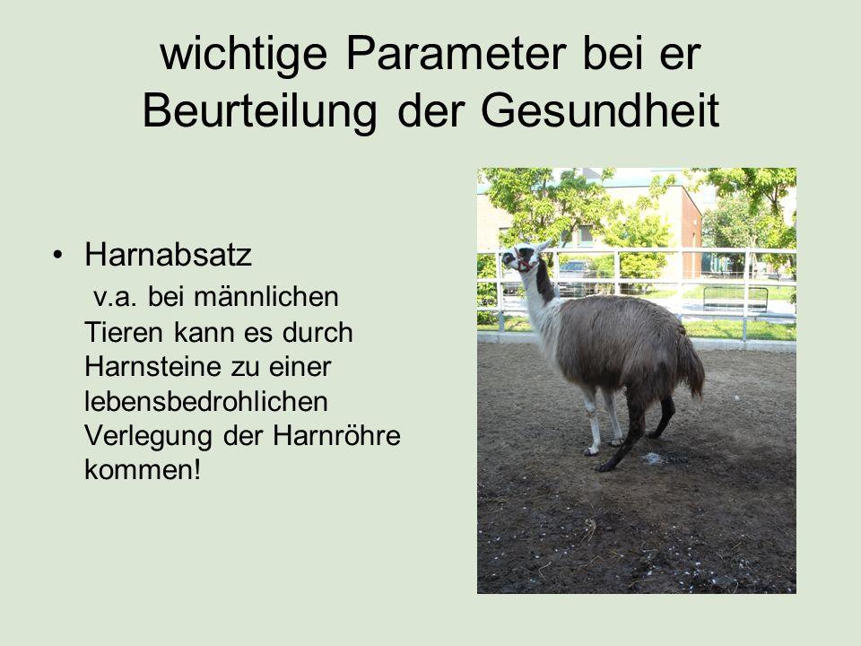 Um die tatsächliche Futter- und Wasseraufnahme beurteilen zu können sowie um den Kot- und Harnabsatz überprüfen zu können, ist es von Vorteil, wenn eine Möglichkeit der Separierung eines Tieres besteht (mit Sichtkontakt zu den anderen Tieren)